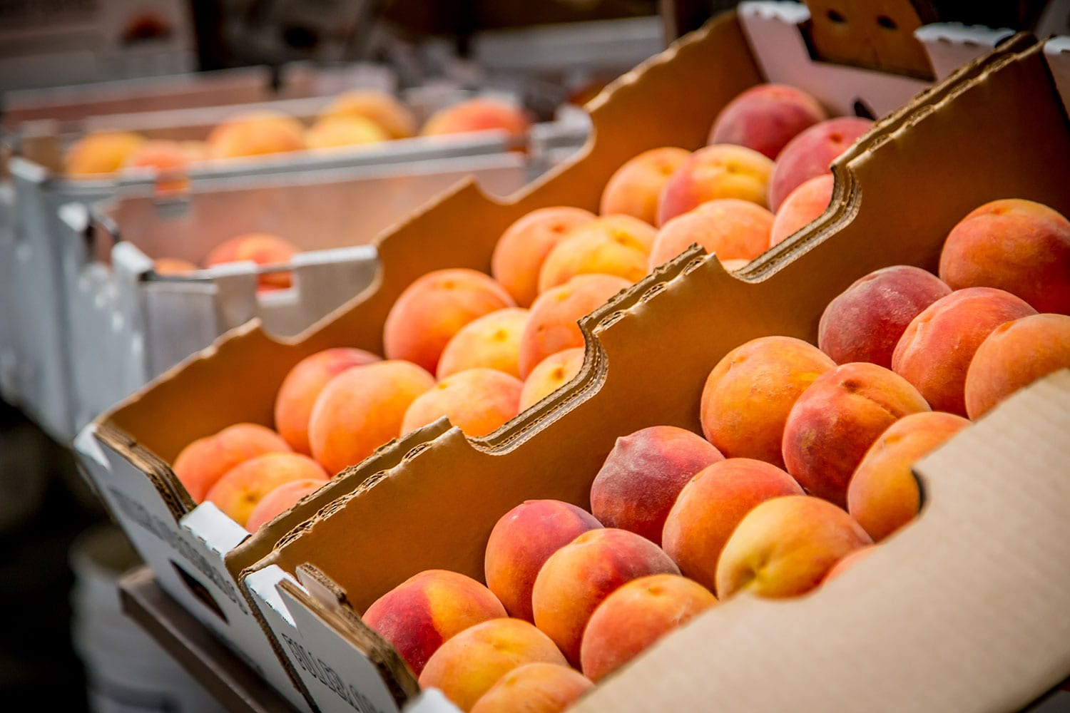 fuller orchard peaches